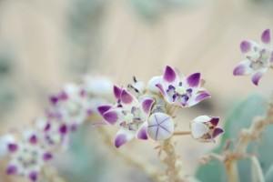 Spring-flower-spring-22176888-1200-800